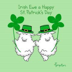 Irish ewe