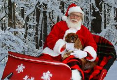 "Santa and his ""Dog Sled"""