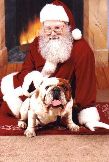 Santa with bulldog