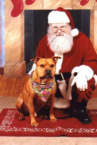 Santa with a very nice pitbull