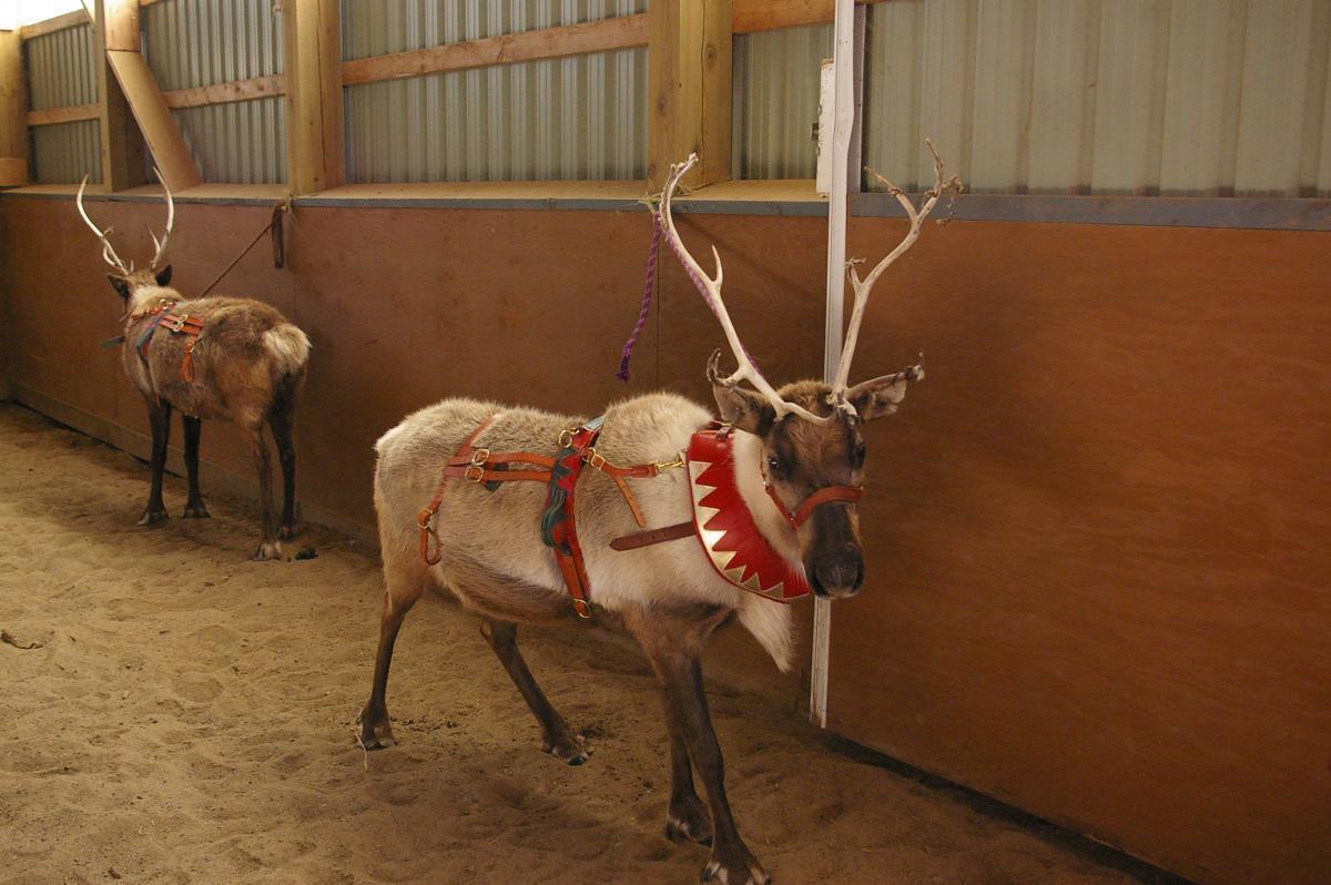 Santa & Reindeer Christmas 2009