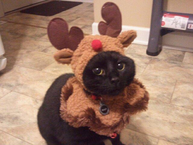Billy the Reindeer