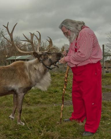 Reindeer Rendezvous