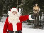 Santa Falcon