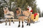 sleigh3.jpg