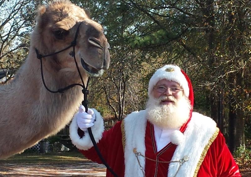 Santa-Camel.jpg