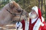 Santa-camel-closeup.jpg