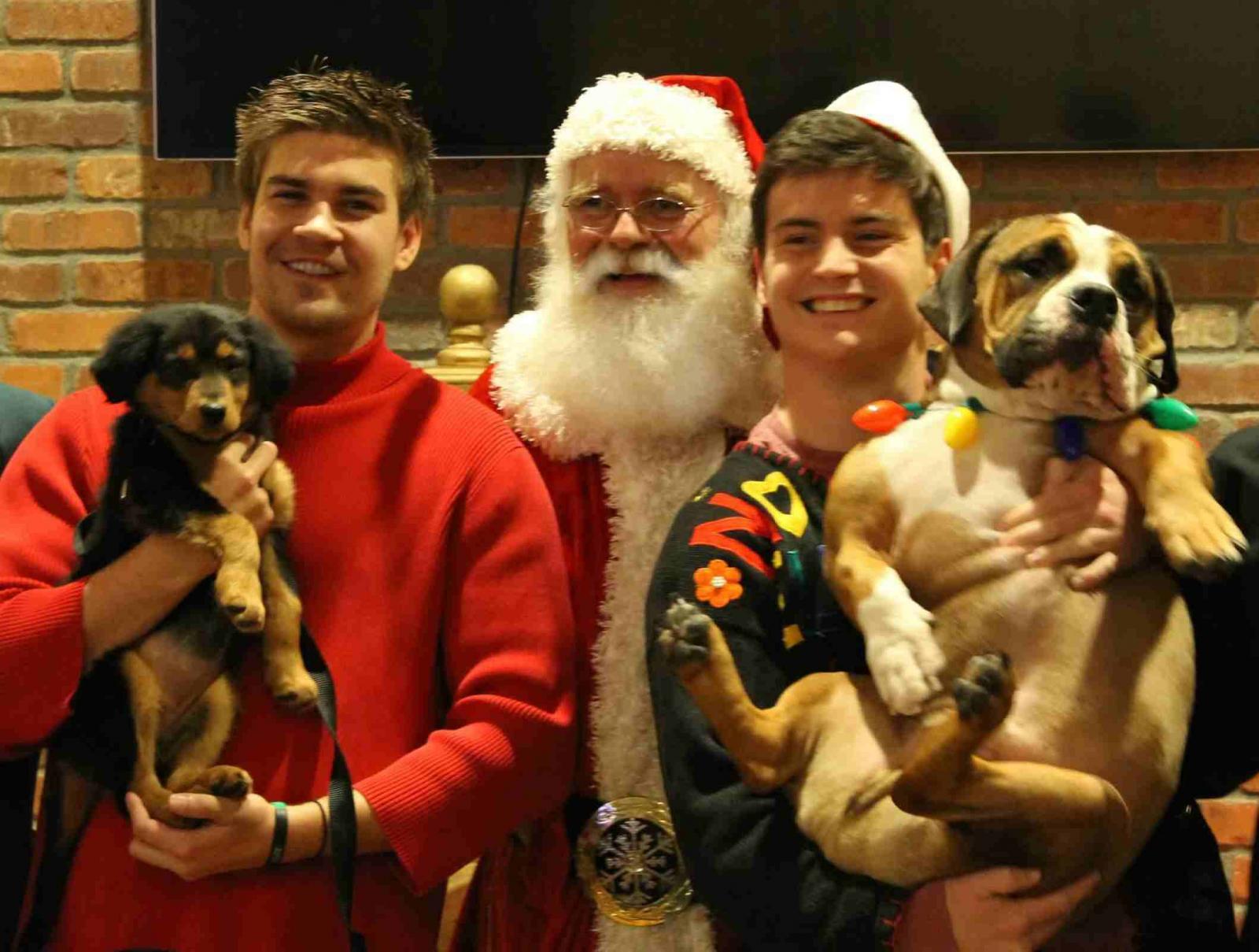 Christmasdogsweb.jpg