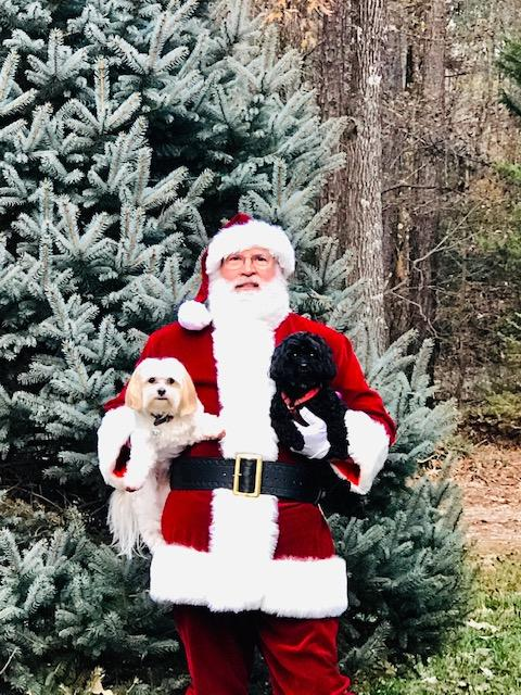 Santa with dogs.JPG